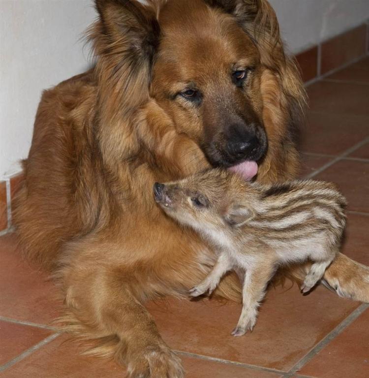 Criatura-Puede-Convertirse-En-Niño-De-Alguien-28