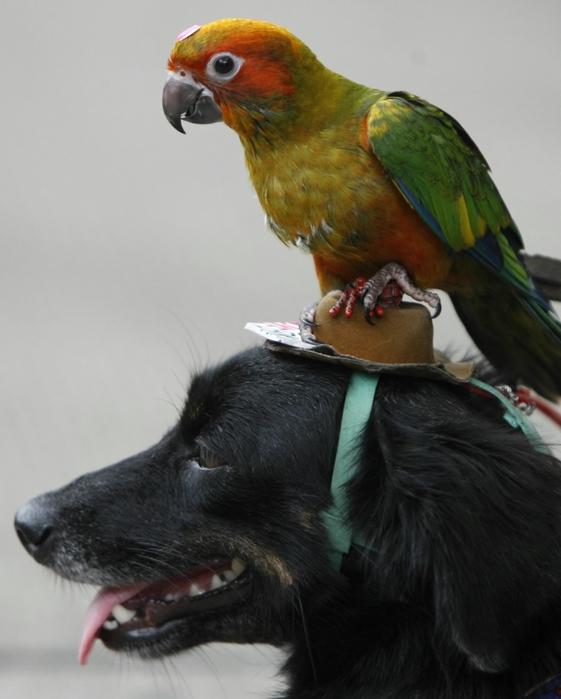 Criatura-Puede-Convertirse-En-Niño-De-Alguien-50