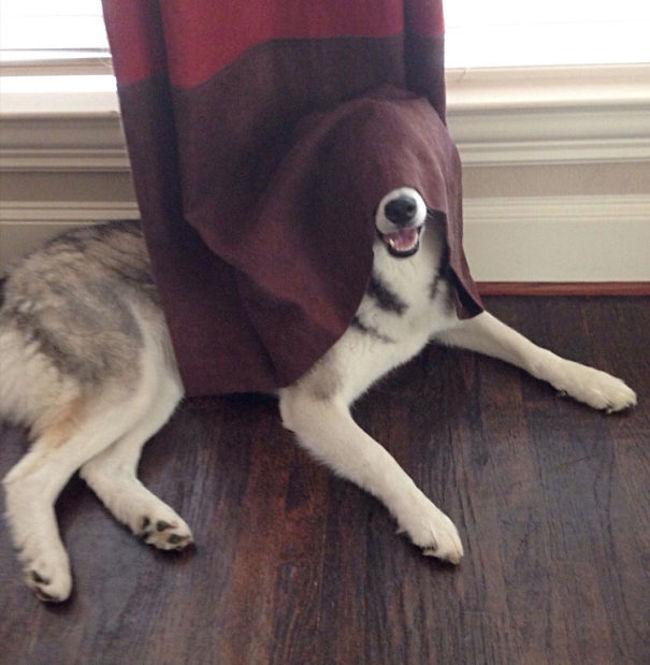 Perros Están Tratando De Encontrar Un Lugar Privado-10