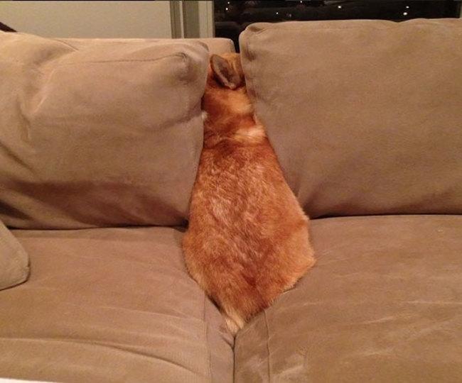 Perros Están Tratando De Encontrar Un Lugar Privado-11
