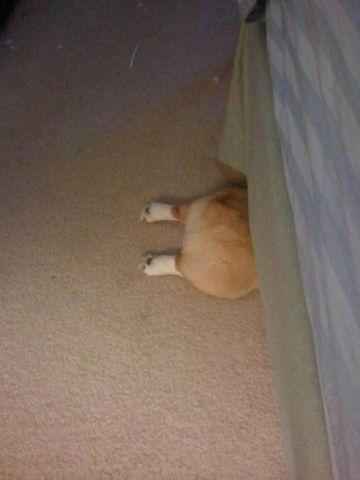 Perros Están Tratando De Encontrar Un Lugar Privado-16