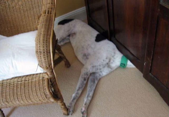 Perros Están Tratando De Encontrar Un Lugar Privado-19