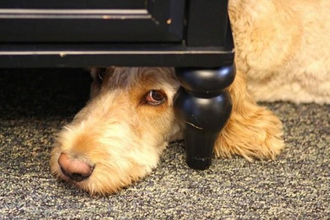 Perros Están Tratando De Encontrar Un Lugar Privado-4