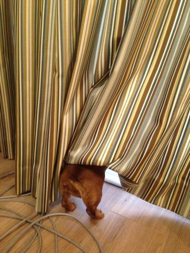 Perros Están Tratando De Encontrar Un Lugar Privado-7