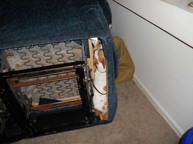 Perros Están Tratando De Encontrar Un Lugar Privado-8