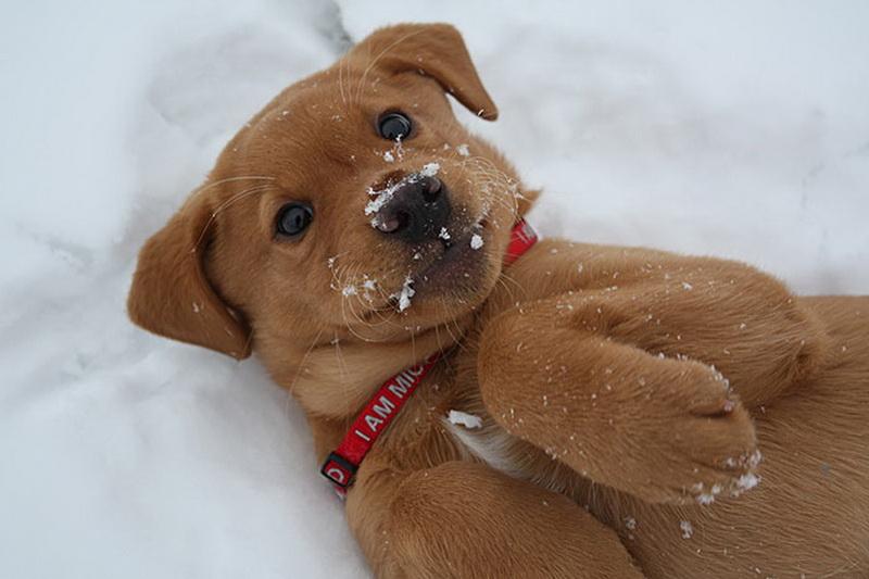 reacciones-de-animales-a-la-primera-nevada-17