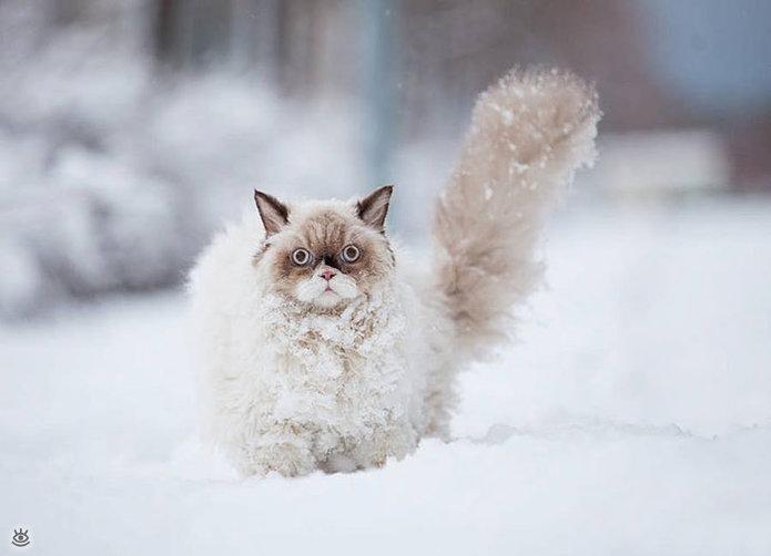 reacciones-de-animales-a-la-primera-nevada-3