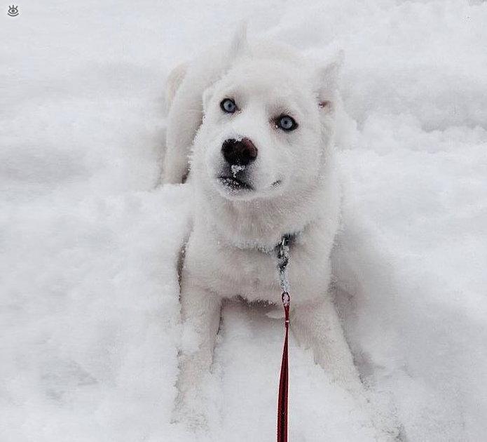 reacciones-de-animales-a-la-primera-nevada-4