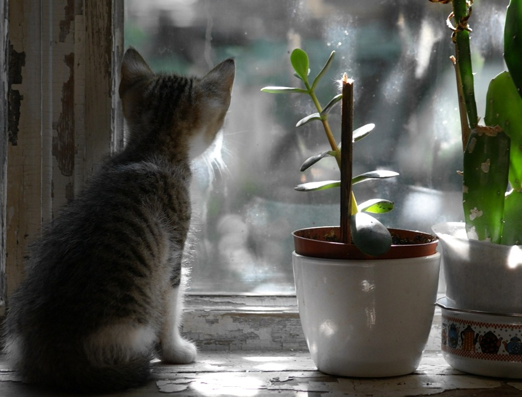 картинки кошка ждет других странностей прикрепленное
