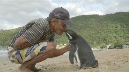kazhdyj-god-etot-pingvin-proplyvaet-bolee-8-tysyach-kilometrov-chtoby-vstretitsya-svoim-luchshim-drugom-1