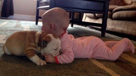baby and english buldog puppy