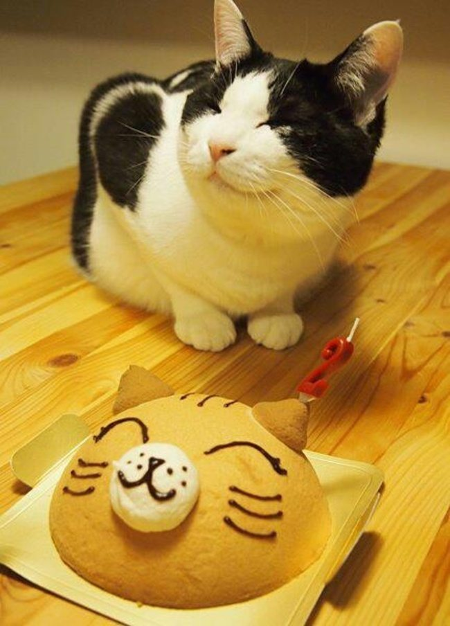 look-what-emotions-could-pets-have-when-they-receive-gifts-17