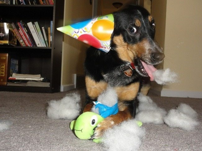 look-what-emotions-could-pets-have-when-they-receive-gifts-20