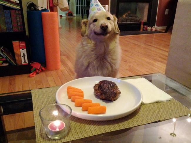 look-what-emotions-could-pets-have-when-they-receive-gifts-21
