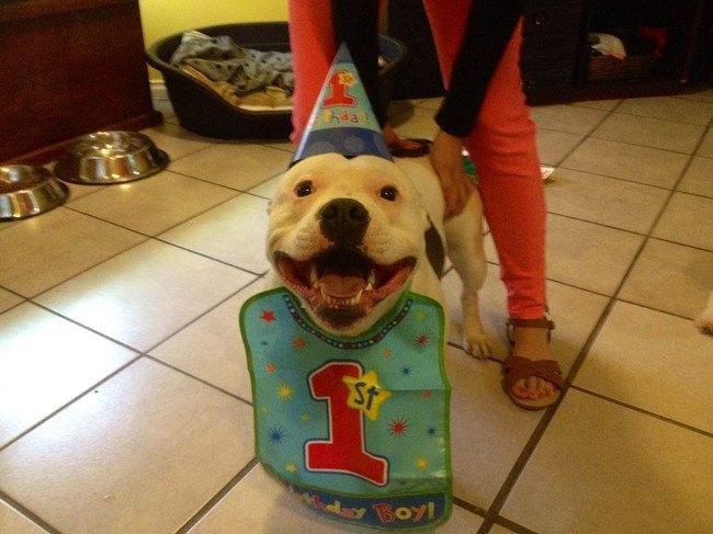 look-what-emotions-could-pets-have-when-they-receive-gifts-22