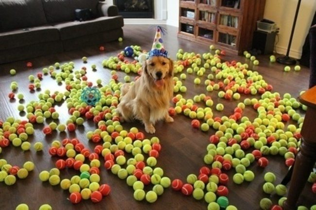 look-what-emotions-could-pets-have-when-they-receive-gifts-25