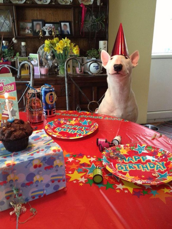 look-what-emotions-could-pets-have-when-they-receive-gifts-26