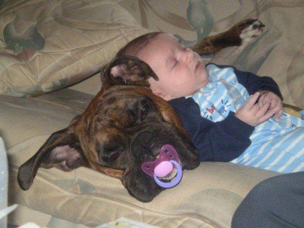 friendship-between-children-and-animals-19