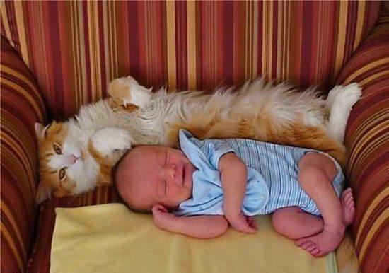 friendship-between-children-and-animals-2