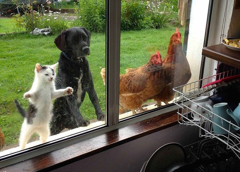 what-animals-are-trying-so-hard-to-see-in-the-windows-1