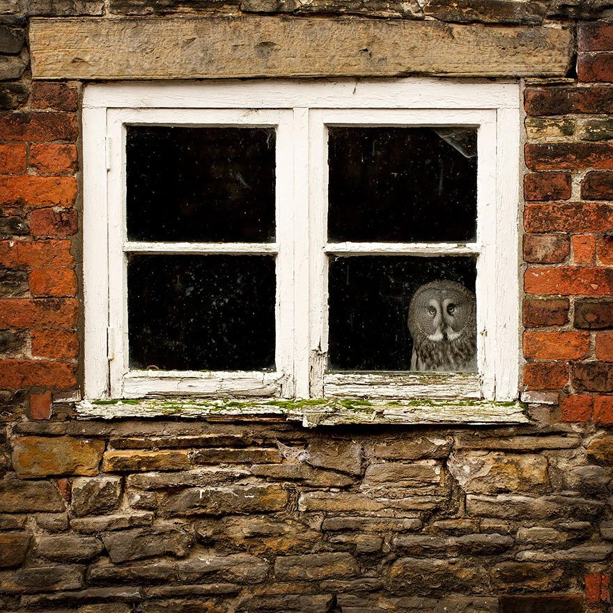 what-animals-are-trying-so-hard-to-see-in-the-windows-10