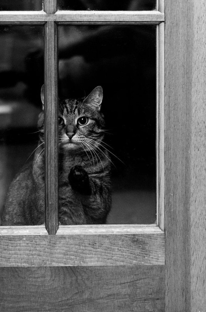 what-animals-are-trying-so-hard-to-see-in-the-windows-11