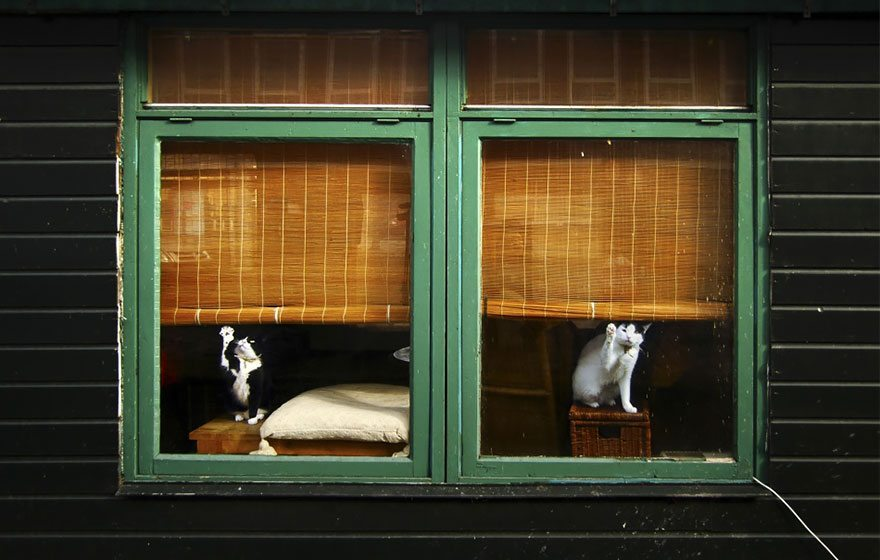 what-animals-are-trying-so-hard-to-see-in-the-windows-12