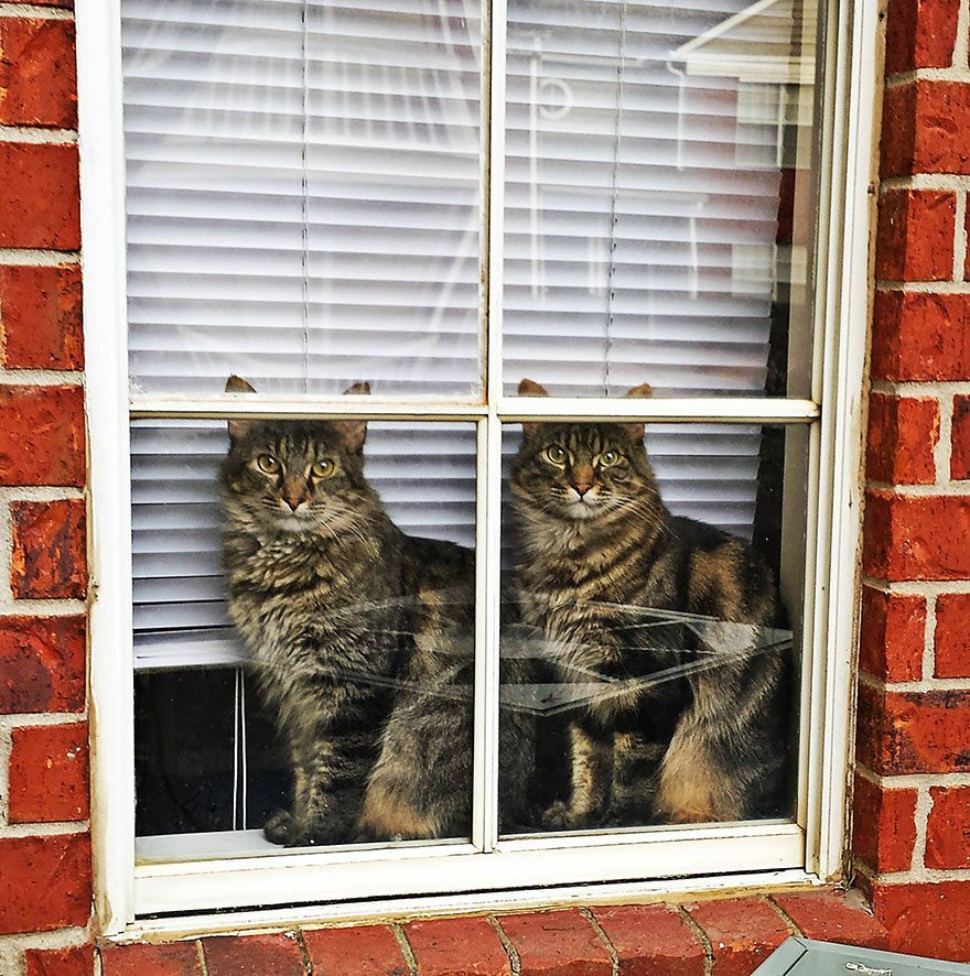 what-animals-are-trying-so-hard-to-see-in-the-windows-15