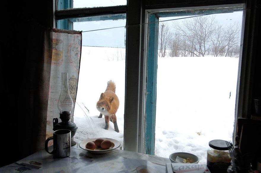 what-animals-are-trying-so-hard-to-see-in-the-windows-16