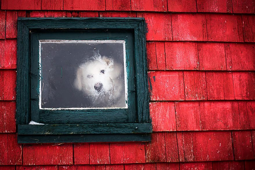 what-animals-are-trying-so-hard-to-see-in-the-windows-2