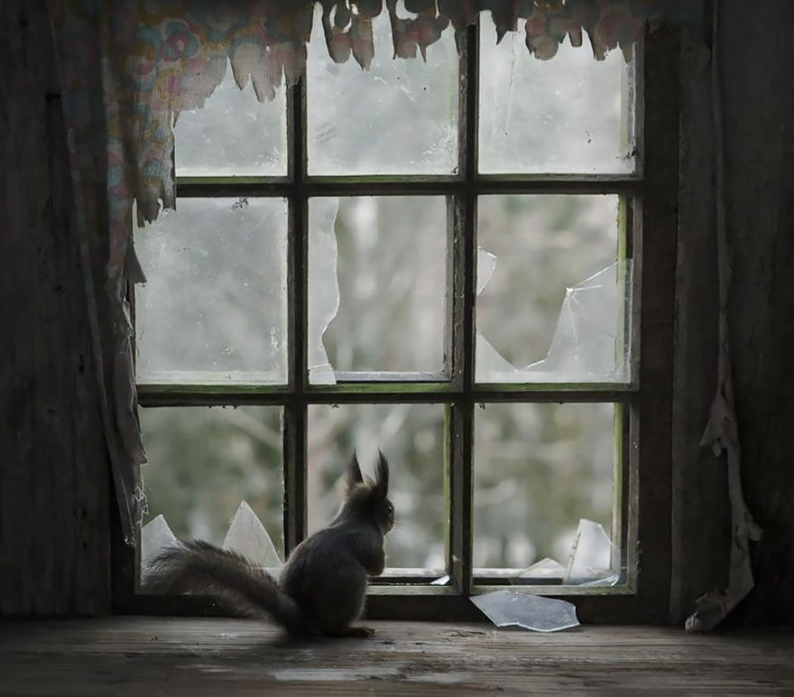 what-animals-are-trying-so-hard-to-see-in-the-windows-3
