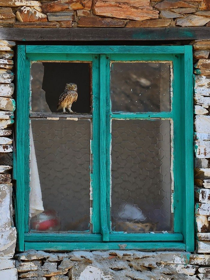 what-animals-are-trying-so-hard-to-see-in-the-windows-6