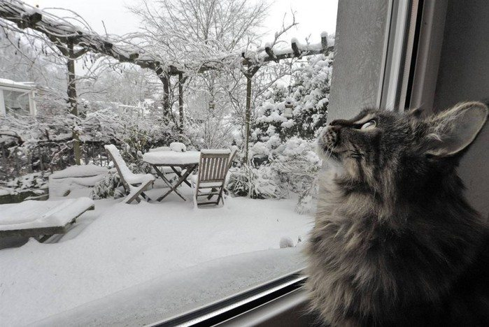 what-animals-are-trying-so-hard-to-see-in-the-windows-60