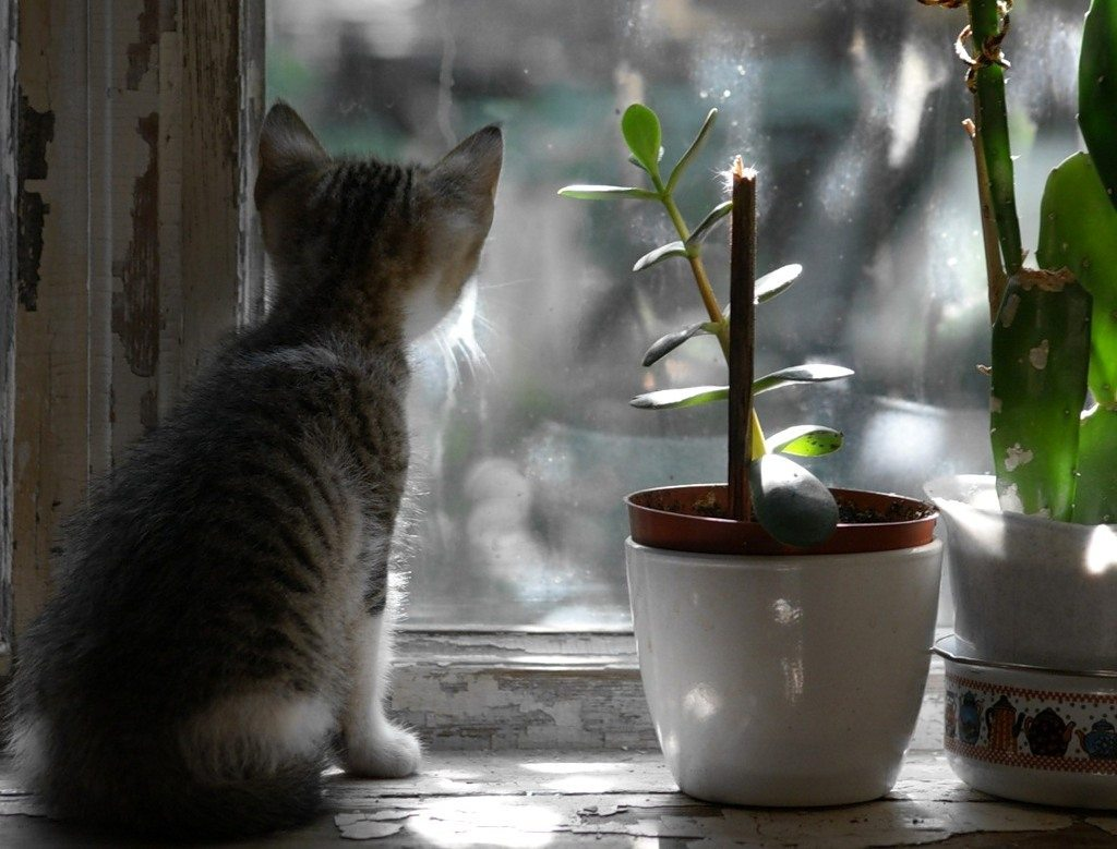 what-animals-are-trying-so-hard-to-see-in-the-windows-62
