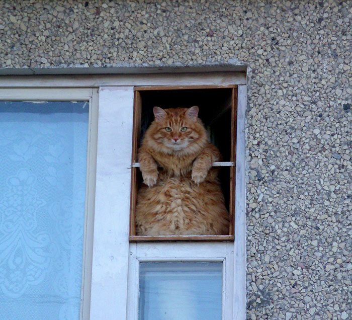 what-animals-are-trying-so-hard-to-see-in-the-windows-64