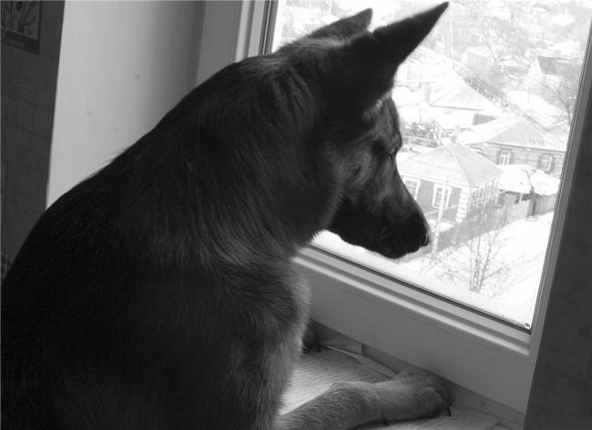 what-animals-are-trying-so-hard-to-see-in-the-windows-65