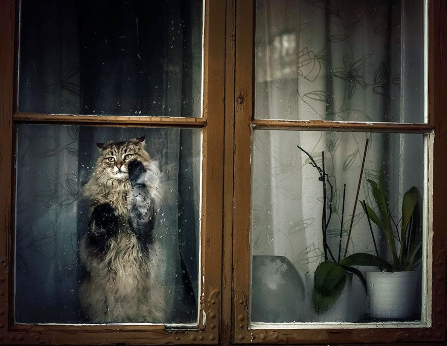 what-animals-are-trying-so-hard-to-see-in-the-windows-7