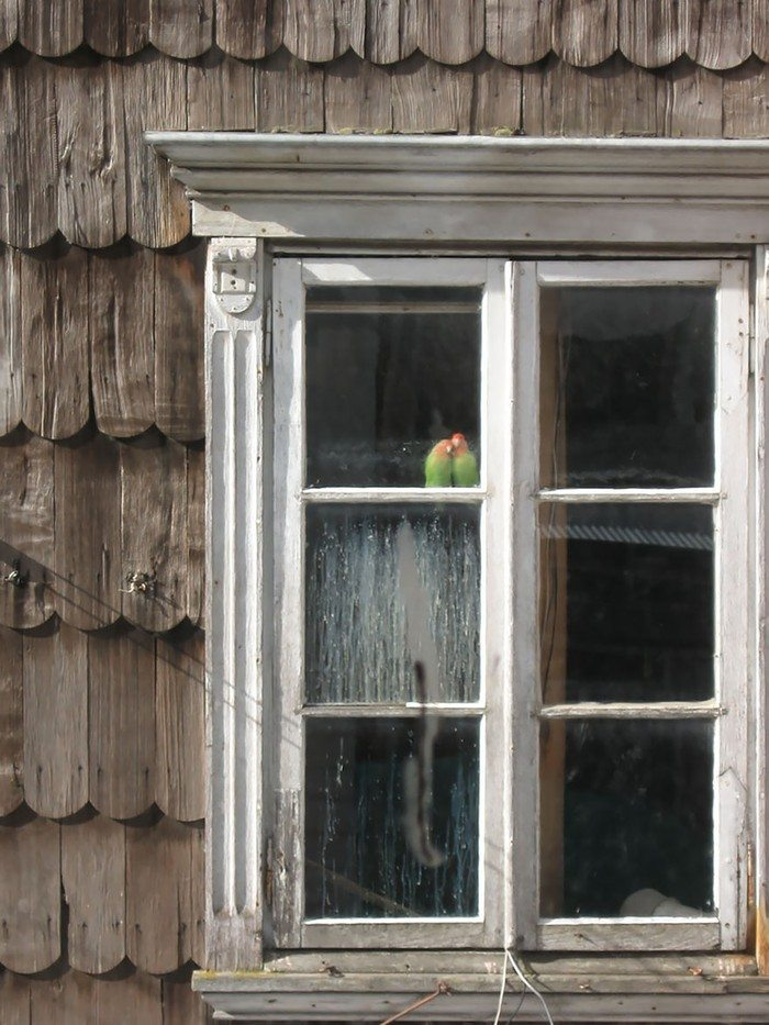what-animals-are-trying-so-hard-to-see-in-the-windows-8