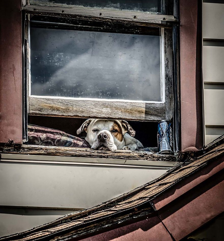 what-animals-are-trying-so-hard-to-see-in-the-windows-9