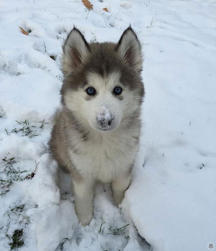 Animal-reactions-to-the-first-snow-10