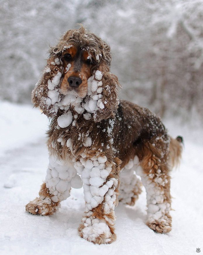 Animal-reactions-to-the-first-snow-12