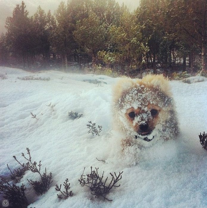 Animal-reactions-to-the-first-snow-13