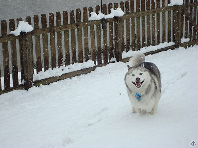 Animal-reactions-to-the-first-snow-15