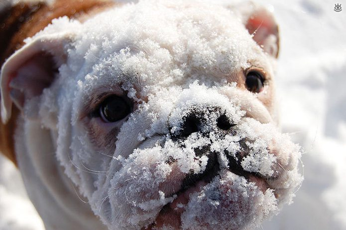 Animal-reactions-to-the-first-snow-16