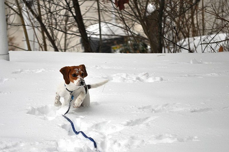Animal-reactions-to-the-first-snow-19
