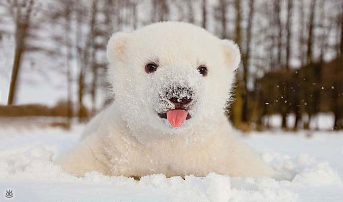 Animal-reactions-to-the-first-snow-2