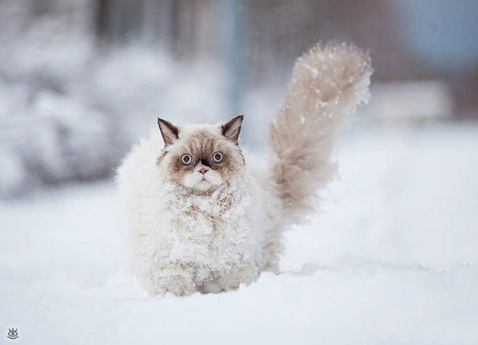 Animal-reactions-to-the-first-snow-3