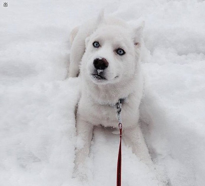 Animal-reactions-to-the-first-snow-4
