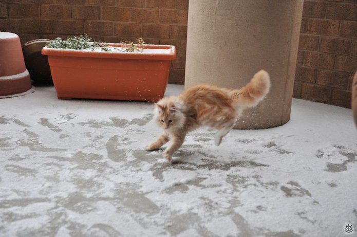 Animal-reactions-to-the-first-snow-6