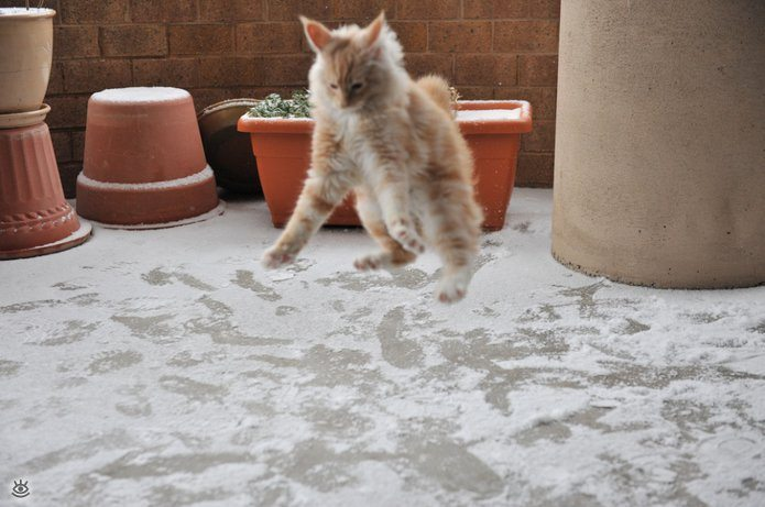 Animal-reactions-to-the-first-snow-7